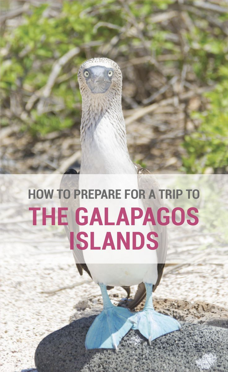 It is important to be prepared for a trip to the Galapagos Islands in Ecuador. Here are my top tips on How To Prepare For A Trip To The Galapagos Islands.