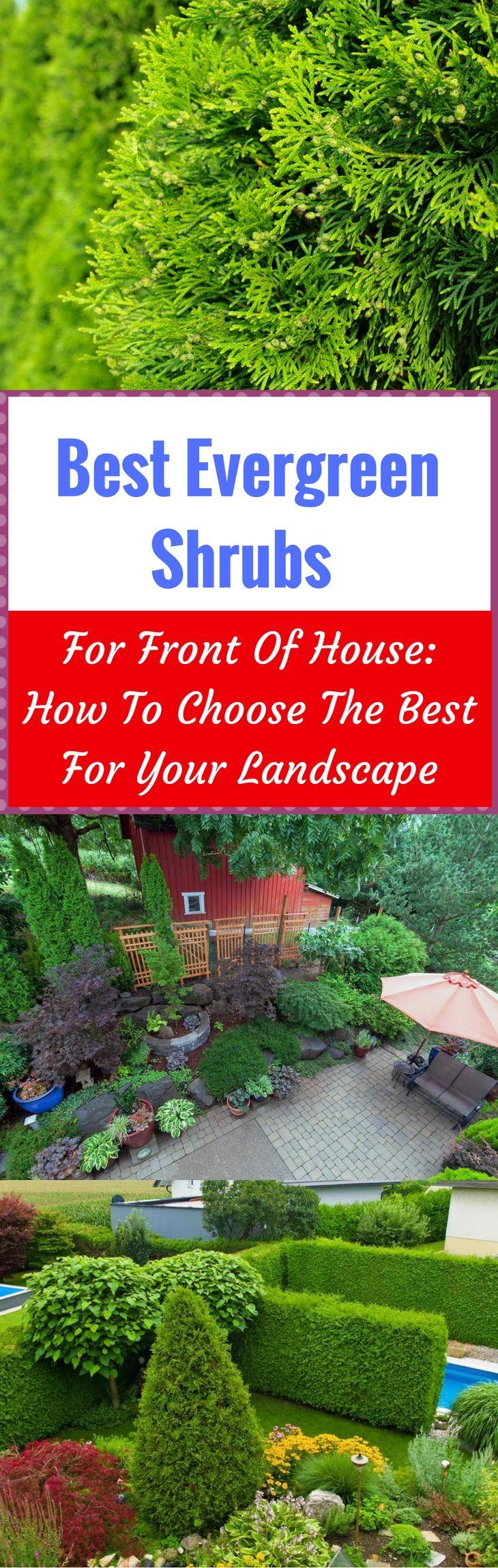 best 25 evergreen shrubs ideas on pinterest shrubs winter