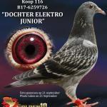 "116 - B17-6259726 ""DOCHTER ELEKTRO JUNIOR"" ♀   De Duif"