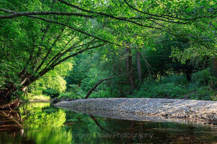Green River, Bulgaria, forest, reflections, river, Strandzha