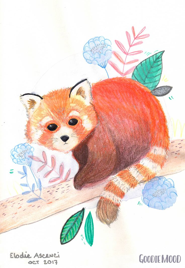 illustration d'un panda roux à l'aquarelle et aux crayons de couleurs