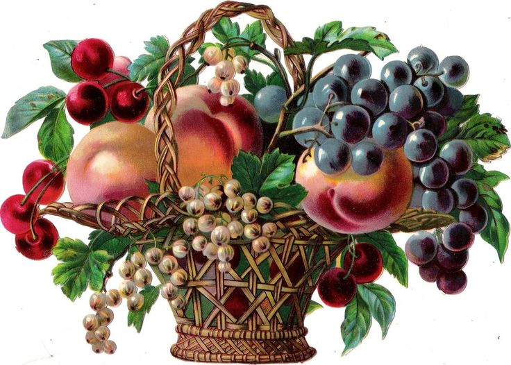 Oblaten Glanzbild scrap die cut chromo Obst Korb  23,5cm  basket  fruits Früchte