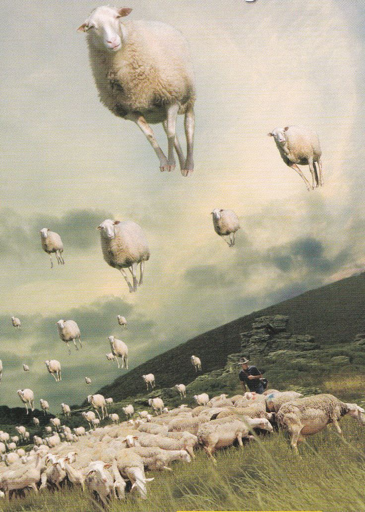 Ovejas voladoras