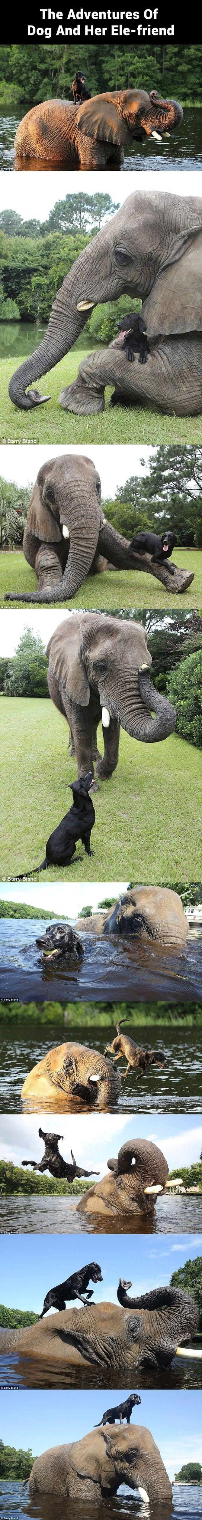 Elephant plays fetch with her puppy pal..