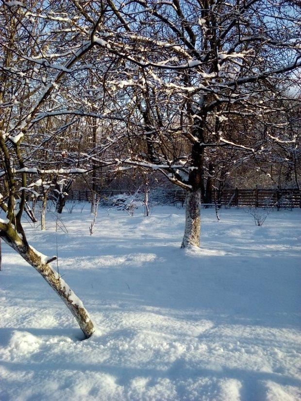 Zima w Polsce/Winter in Poland, Natura 15 257 (autor: jlez)