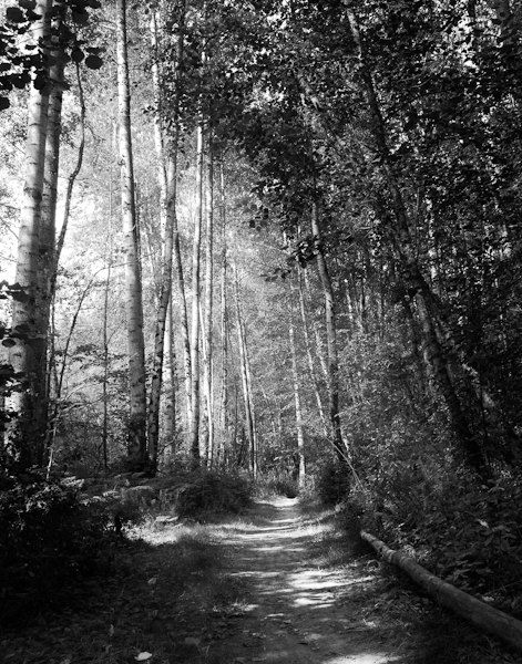 Dark forest gothic photography black and white photography dark art nature print