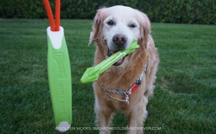 Chuckit! Ultra Sling #dogtoy A new way to play. Highly portable and versatile fetch device that can shoot long or short distances- you can change it up each time you shoot!