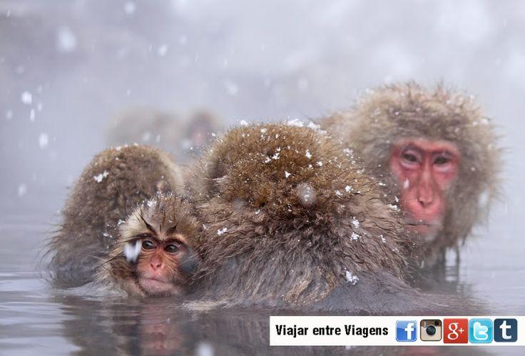 Quando se fala emJigokudani Onsena maioriadas pessoas não associa nada a essas palavras. Mas quando vêem uma imagem dos macacos da neve ficam apaixonados pelo local.