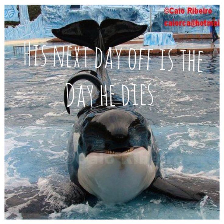 Orcas In Captivity 32 best Tilikum images...