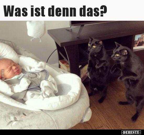 Was ist denn das? | Lustige Bilder, Sprüche, Witze, echt lustig – Haustiger  | Magazin für Katzenthemen – Katzen Ideen etc.