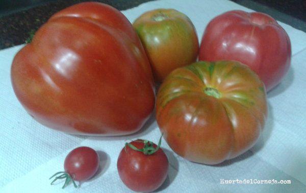 Algunos de nuestros tomates