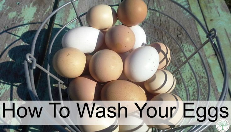 what is the best way of washing chicken eggs? How do you safely clean them? Or does it really matter? The Homesteading Hippy