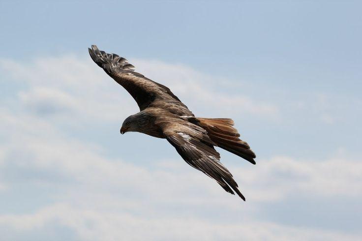 Mari Kita Terbang Tinggi  Suatu hari seorang Raja mendapat hadiah 2 ekor anak burung elang.  Lalu dia berpikir akan bagus sekali jika elang ini dilatih untuk terbang tinggi. Tentu akan lebih indah lagi.  Ia memanggil pelatih burung yang tersohor di negerinya untuk melatih 2 elang ini.  Setelah beberapa bulan pelatih burung ini melapor: Seekor elang telah terbang tinggi dan melayang-layang di angkasa. Namun yang seekor lagi tidak beranjak dari pohonnya.  Rajapun memanggil semua ahli hewan…
