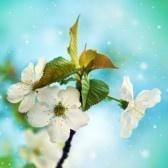 Bloemen van de kersenbloesems op een lentedag stock photography