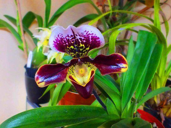 orquideas del ecuador - Google Search