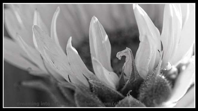 macro flower photography, creative photos, canon 600d, black and white photo, debiriley.com