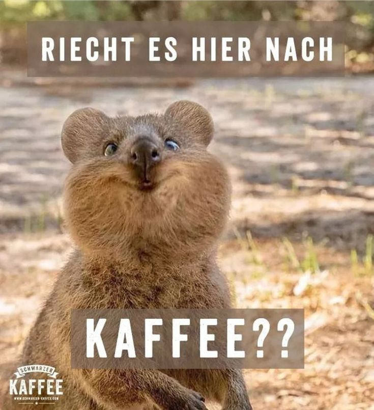 (notitle) – Funny – #Funny #notitle – Kaffee