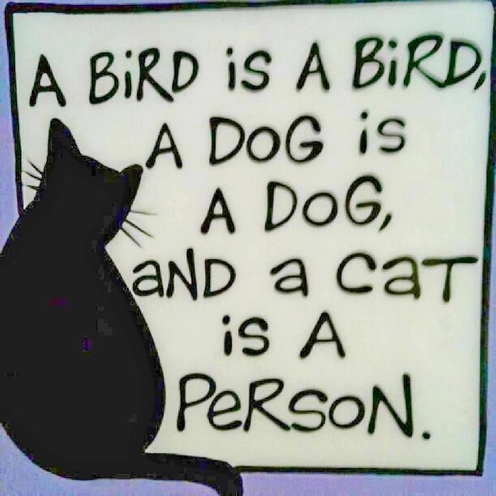 ... saggezza felina ...