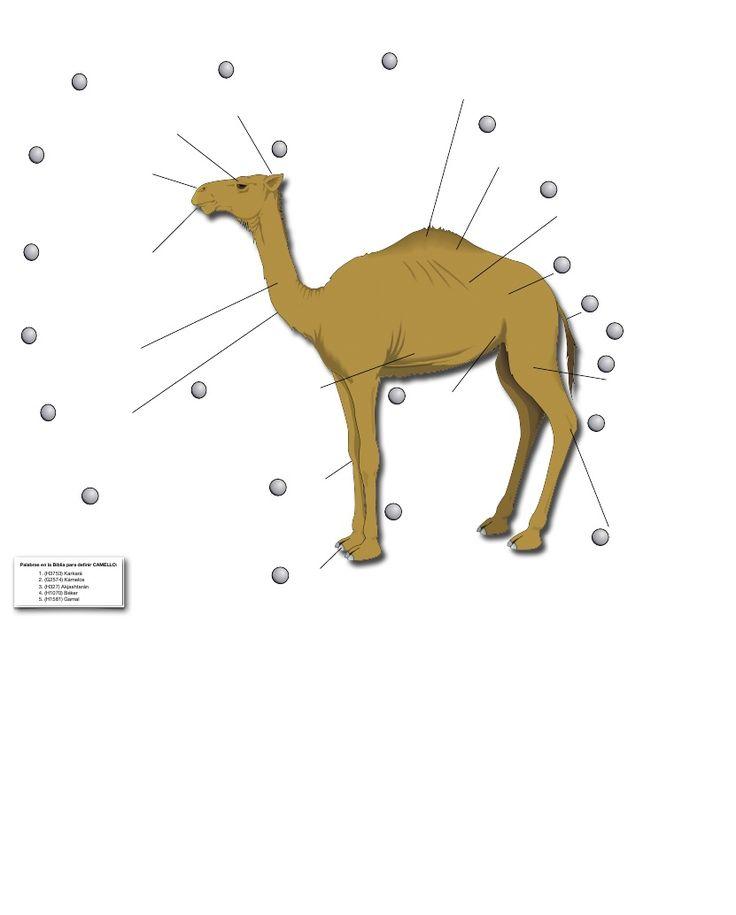 El Camello y Sus Asombrosas Caracteristicas