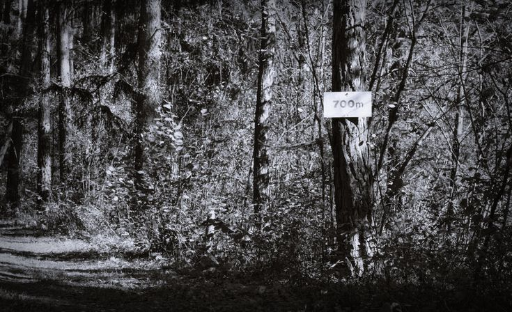 bwstock.photography  //  #700m #pine #forest