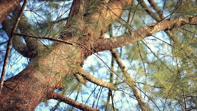 Footage tree @arya_alfatih  #footage  #videohive #videoblock #tree