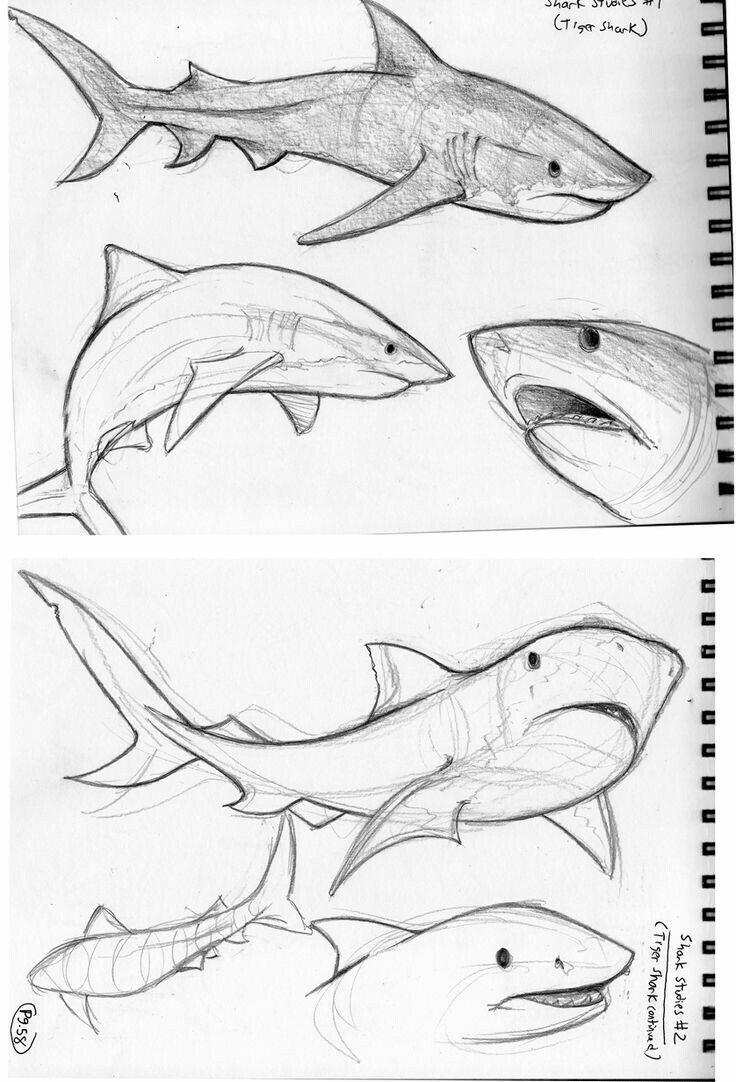 Картинки как нарисовать акулу карандашом поэтапно плаката