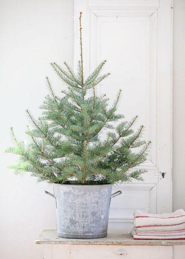 best 25 sapin en pot ideas on pinterest arbres de no l en pot boules neige and boules neige. Black Bedroom Furniture Sets. Home Design Ideas