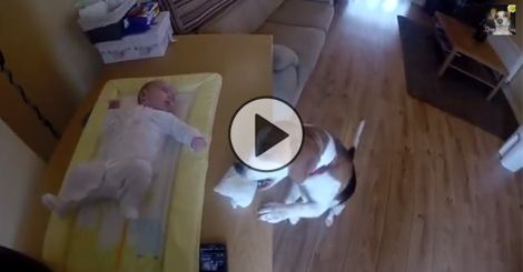 GONE VIRAL: This dog does something so unbelievable, this mother had to record it!