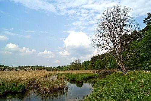 Wiosna – Wikipedia, wolna encyklopedia