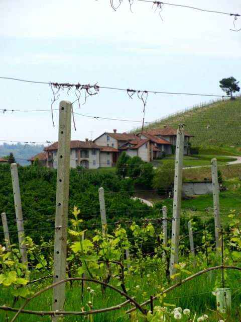 Alba, Piemonte. Italy.