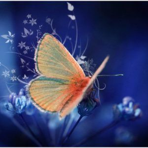 Butterfly Blue Background Wallpaper | butterfly blue background wallpaper 1080p, butterfly blue background wallpaper desktop, butterfly blue background wallpaper hd, butterfly blue background wallpaper iphone