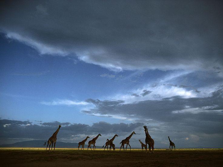 Crossing the Serengeti! www.africatriedandtested.com