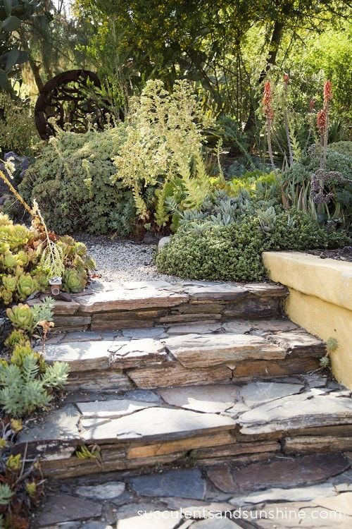 Garden stairs lined with succulents - Succulents and Sunshine