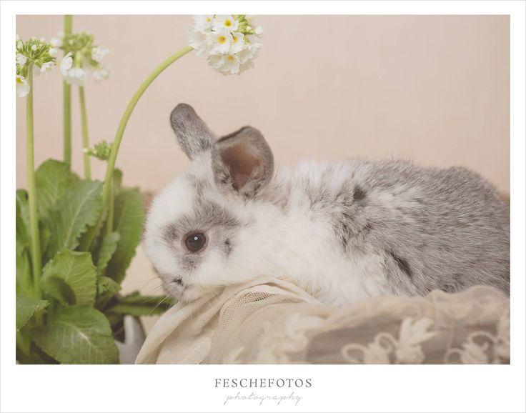 c) feschefotos.net  Hasen Baby, kleine Hasen, Hasenbilder, Hasen im Studio, Osterbilder