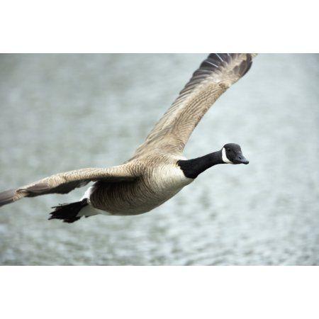 canada goose stockists quebec