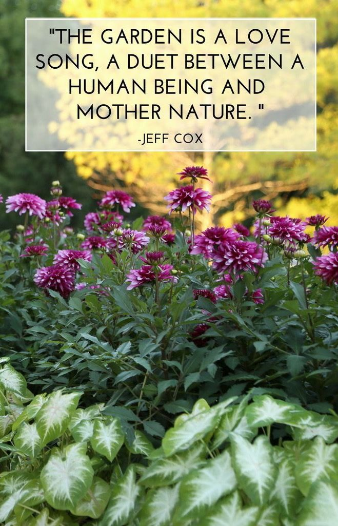 Oh I Love This Quote Marketingjb Johorbahru Malaysia Lovenature Garden Quotes Longfield Gardens Beautiful Flowers Garden