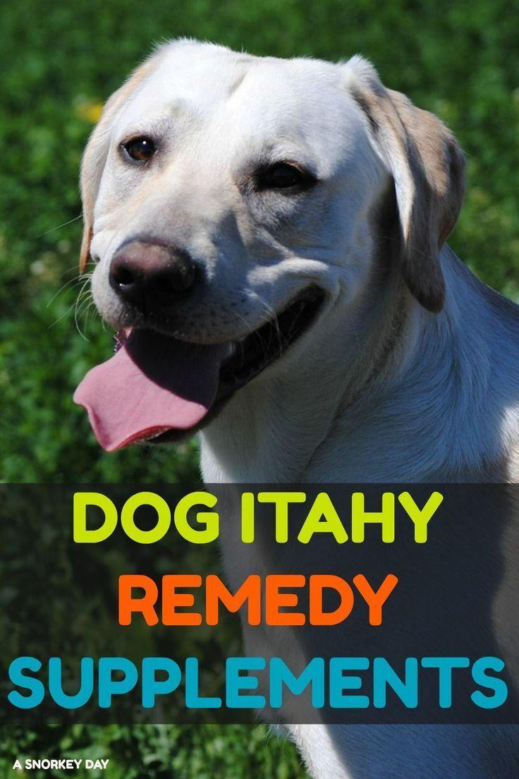 10 Dog Itch Remedies Dog Itchy Skin Remedy Itchy Skin Remedy Dog Advice