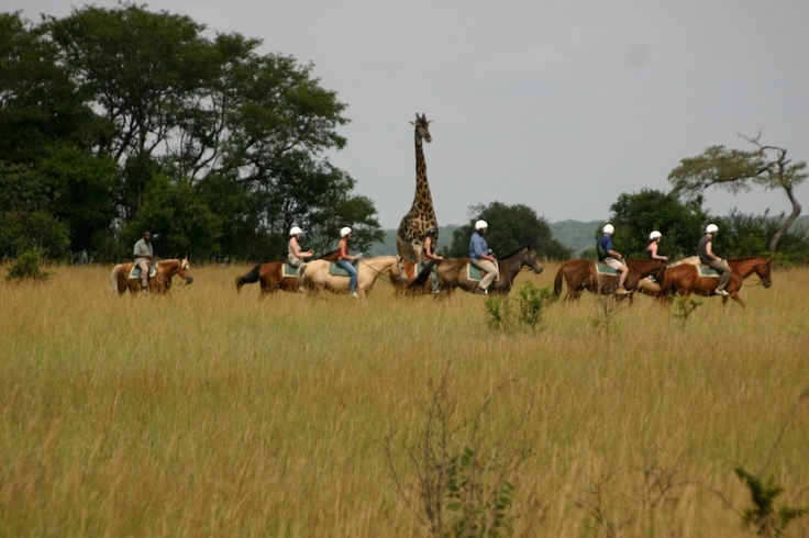 Come closer to the wild animals on horse back. They can only scent the horses and not the people which give you an amazing opportunity to admire them at close range.