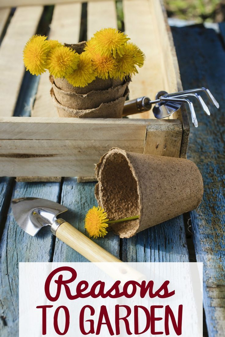 328 best Gardening and Yard Ideas images on Pinterest | Amazing ...