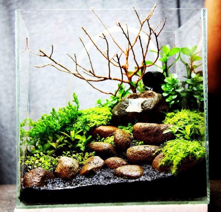 Best 20 betta tank ideas on pinterest betta aquarium for Small betta fish tank