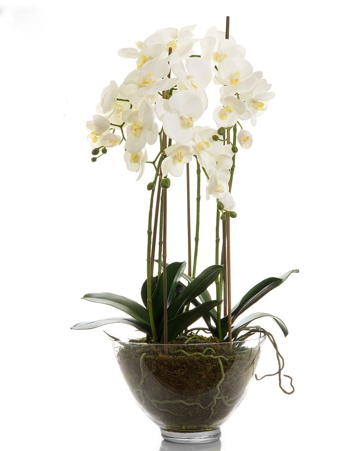 Phalaenopsis Orchid in Clear Pot - Large – Allissias Attic & Vintage French Style