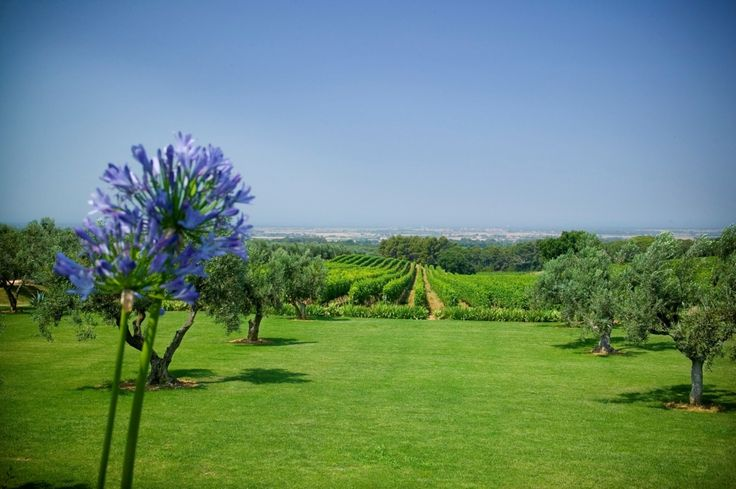 Marchese Winery Estate, luxury villa in Tuscany