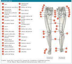 Resultado de imagen para huesos de la pierna