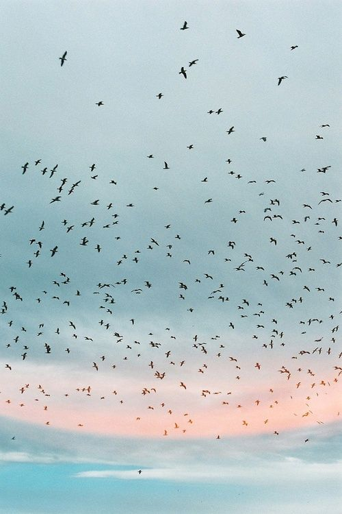 птицы на бирюзовом небе