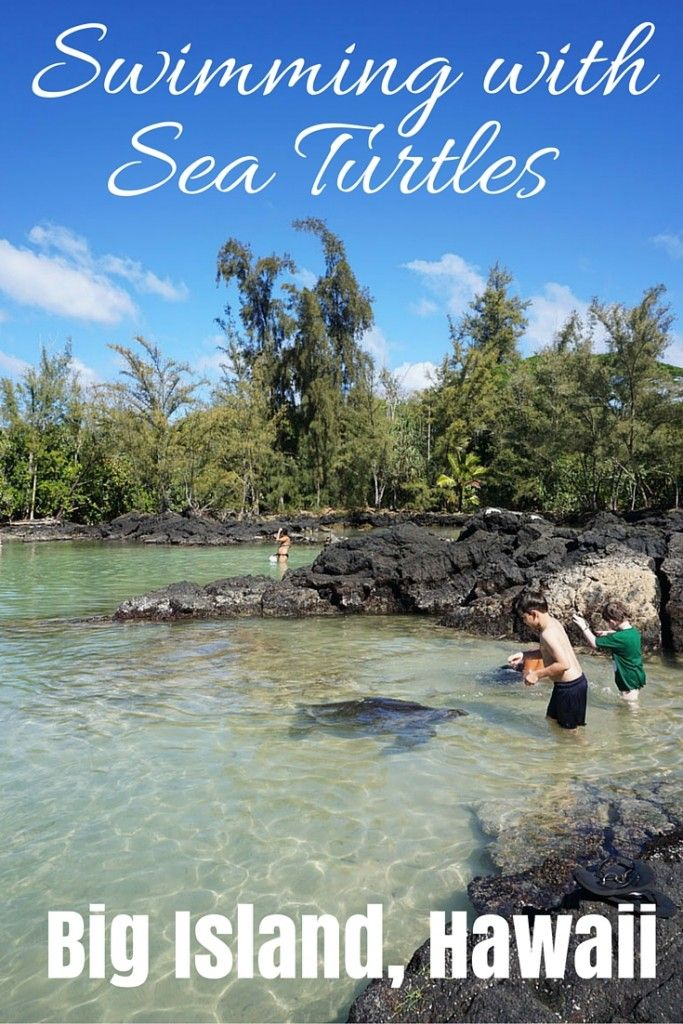 Swimming with Sea Turtles, Big Island, Hawaii - Flashpacker Family