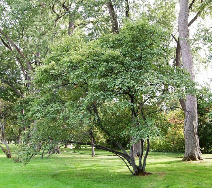 36 best images about colorado yard plants on pinterest gardens sun and small white flowers - Planting fruit trees in the fall a garden full of vigor ...