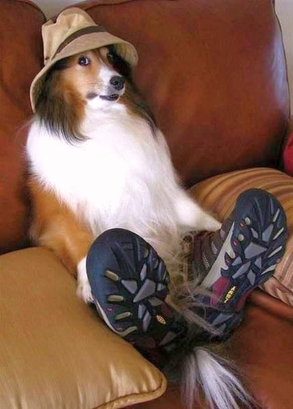 dog listo p la pesca!Shoes, Puppies, Funny Dogs, Silly Dogs, Pets, Funnydogs, Funny Animal, So Funny, Dogs Face