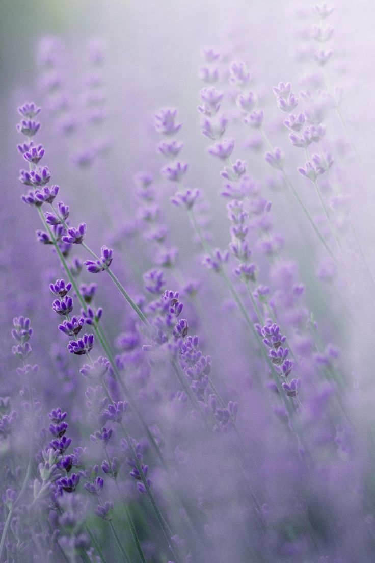 lilac dreams by Manuela Neumann on 500px