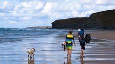 Urlaub mit Hund in Dänemark