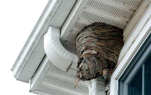 Как избавиться от осиных гнезд на дачном участке